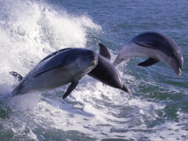 Dolphin Racer - Treasure Bay Resort & Marina