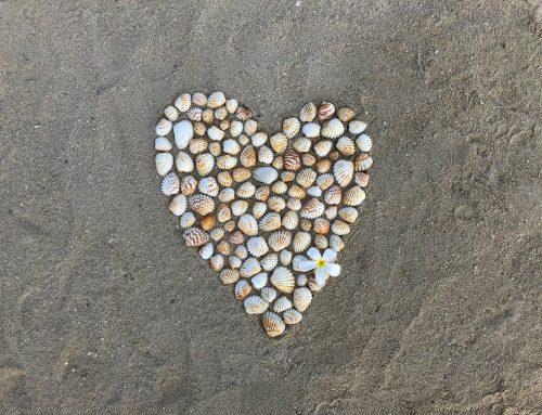 Shell Hunting in Treasure Island